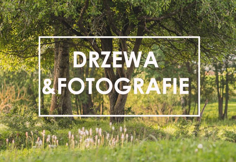 Drzewa i fotografie